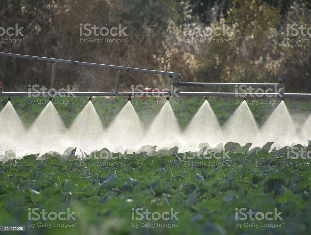 Spraying  green field stock photo