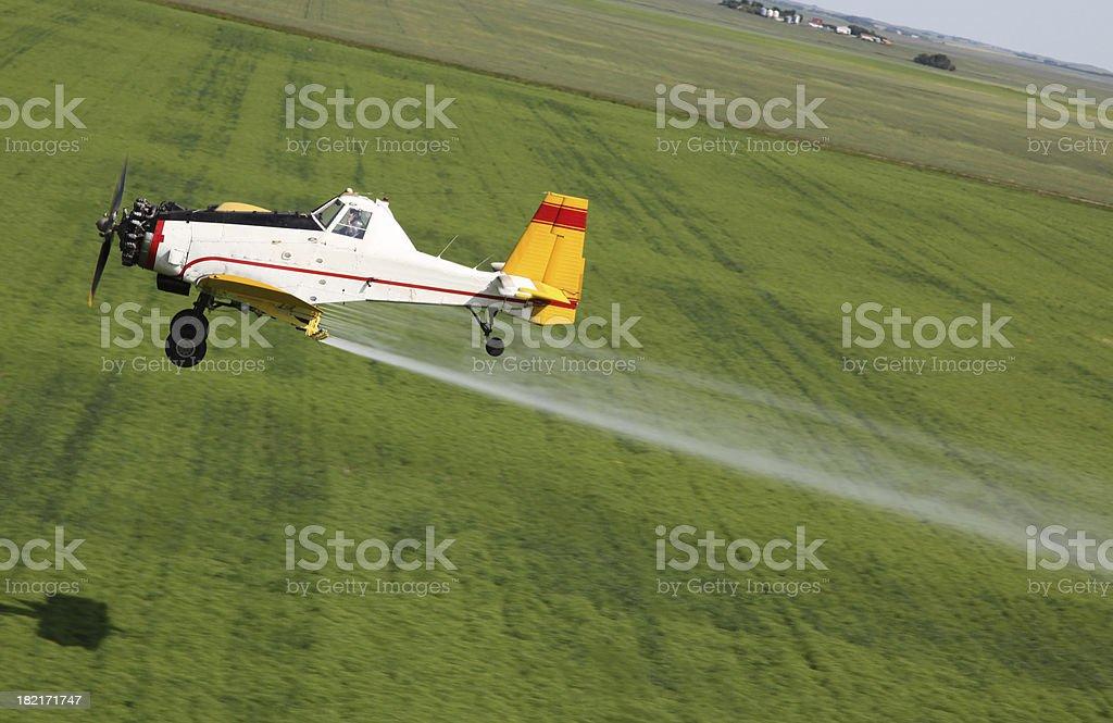 spraying lentils stock photo