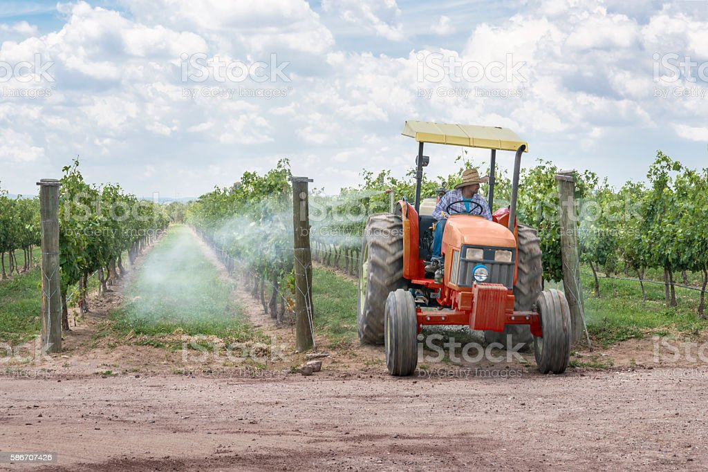 Spraying pesticides in a vineyard stock photo