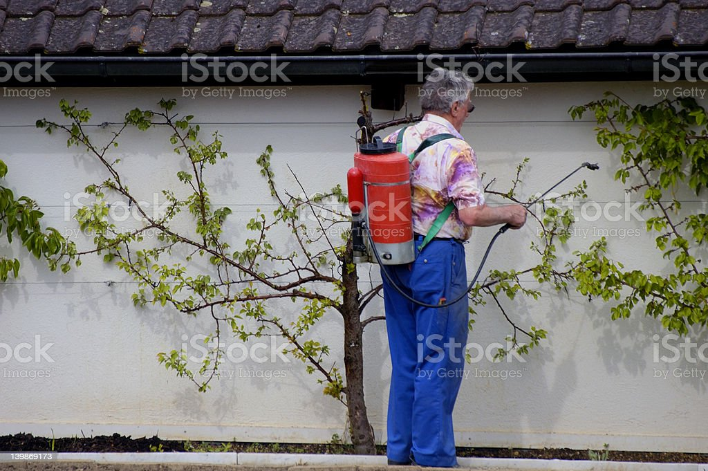 Spraying the fruit royalty-free stock photo