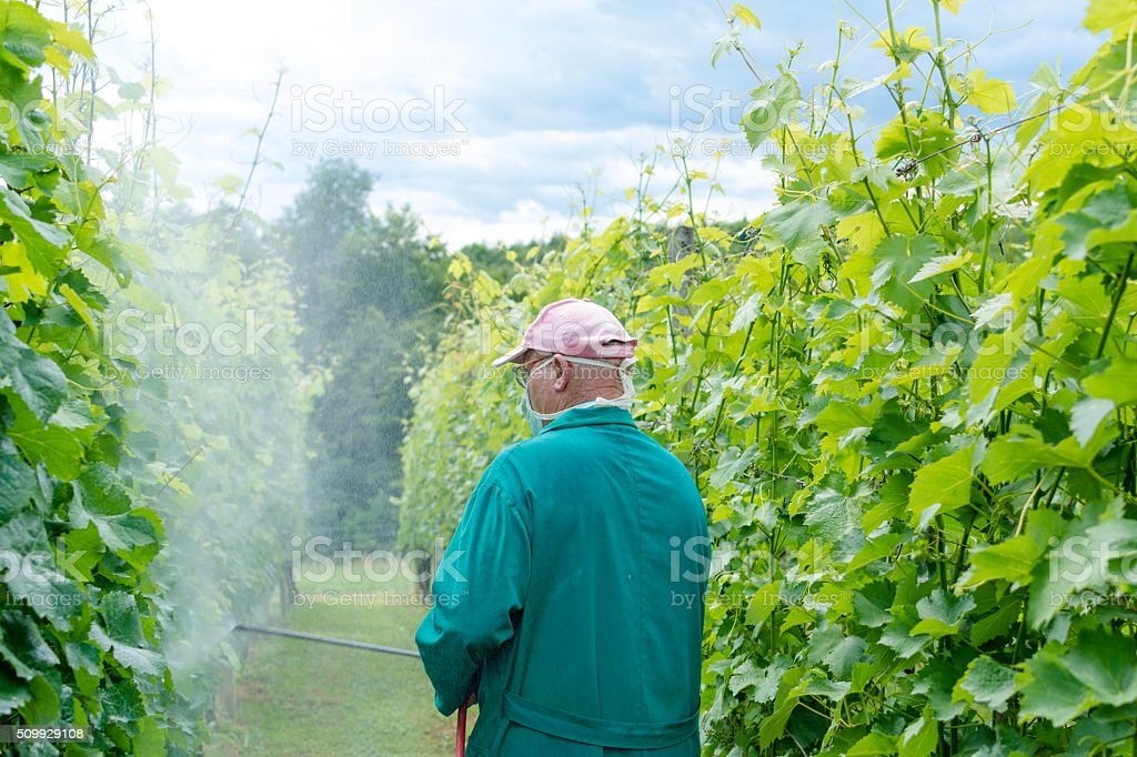 Spraying the vines stock photo