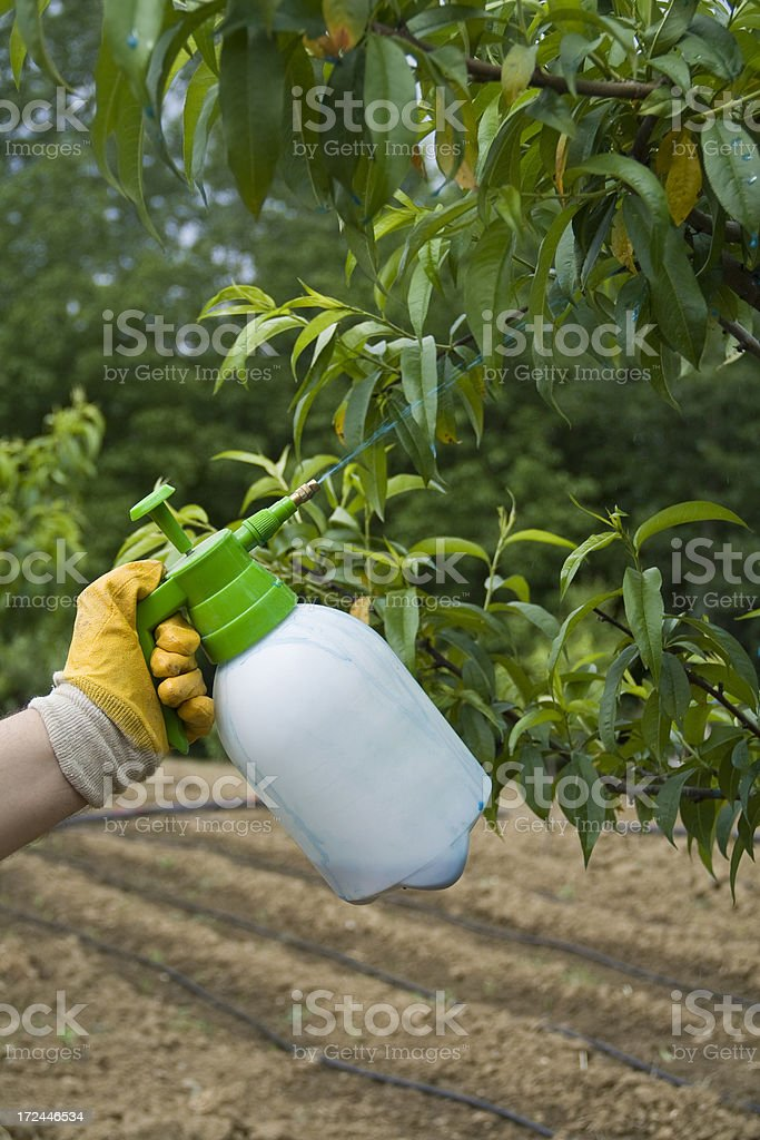 Spraying tree branches in garden royalty-free stock photo