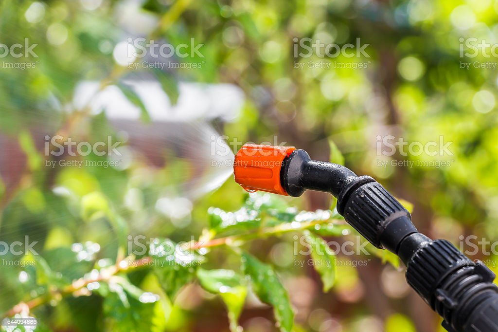 Spraying trees against pests stock photo