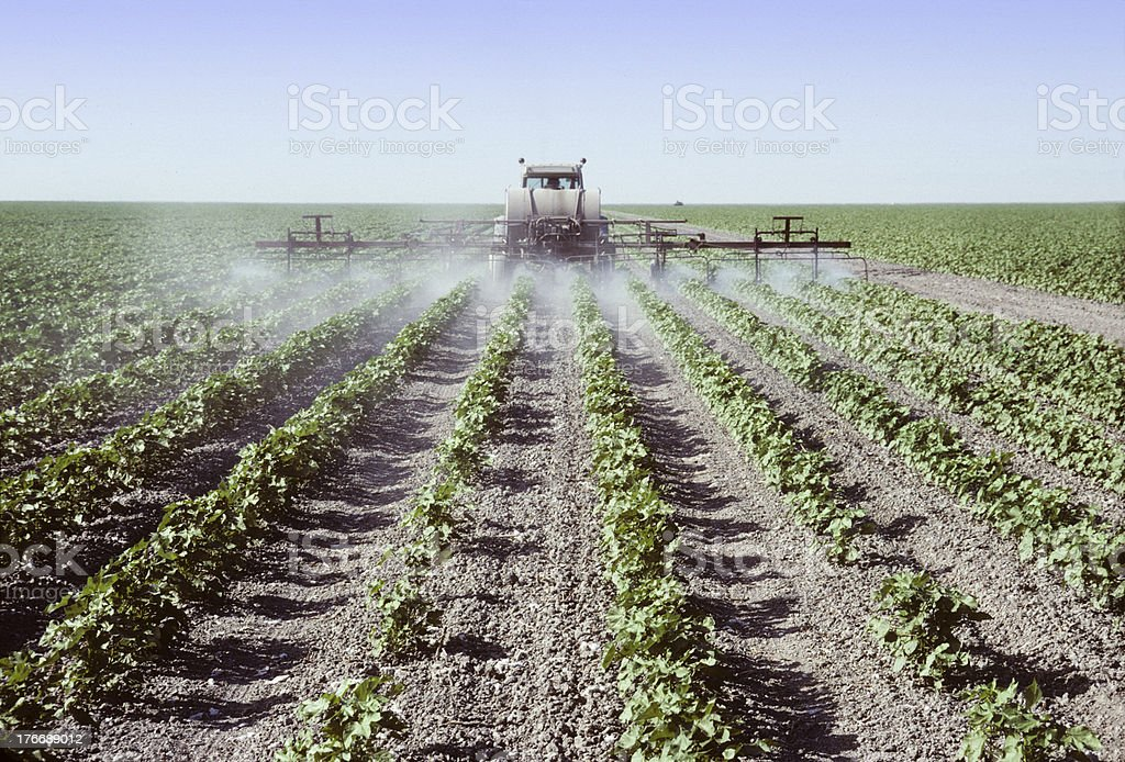 Spraying young cotton plants in a field stock photo