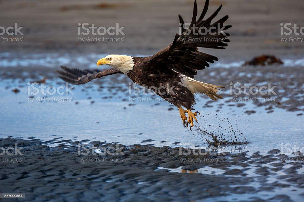 Spread Eagle Open Wings Fishing stock photo