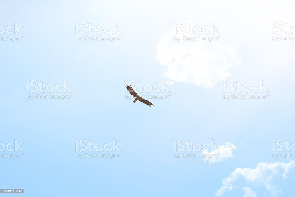 Spread your wings and fly stock photo