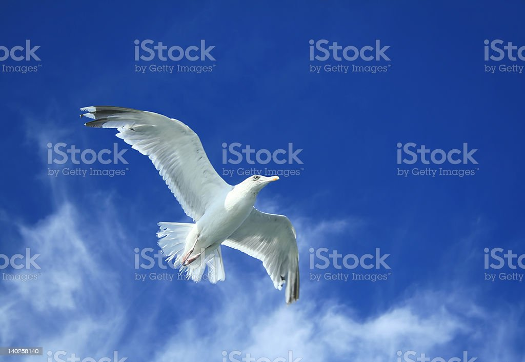 Spread your wings and take to the sky royalty-free stock photo