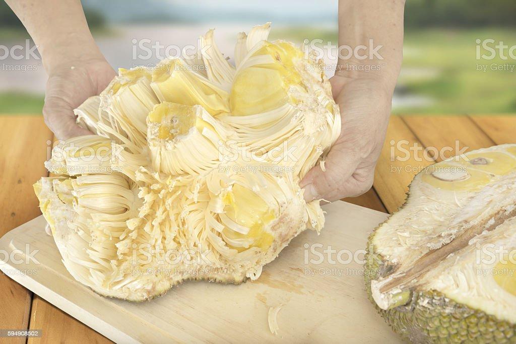 Spreading Jackfruit stock photo
