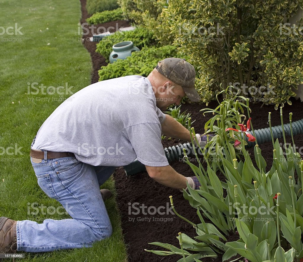 Spreading the Mulch royalty-free stock photo