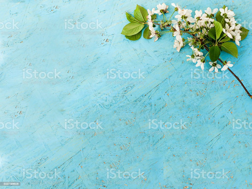 sprig of cherry blossoms on a wooden background stock photo