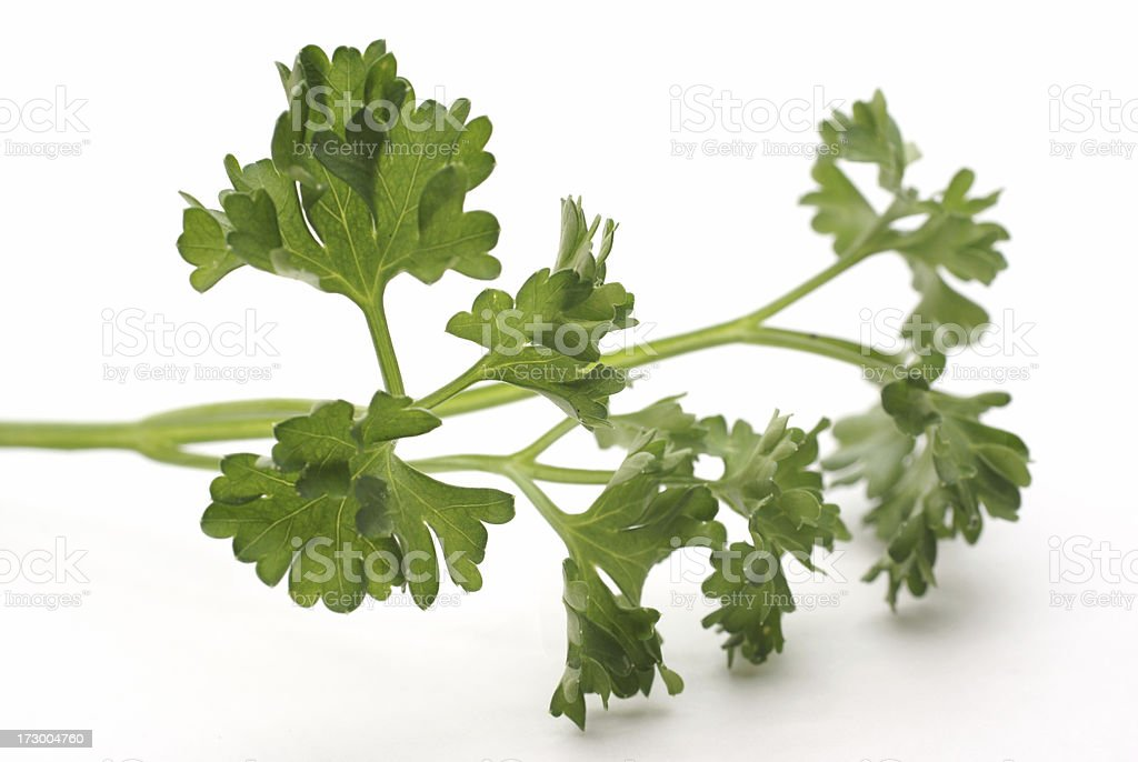 sprig of fresh parsley royalty-free stock photo
