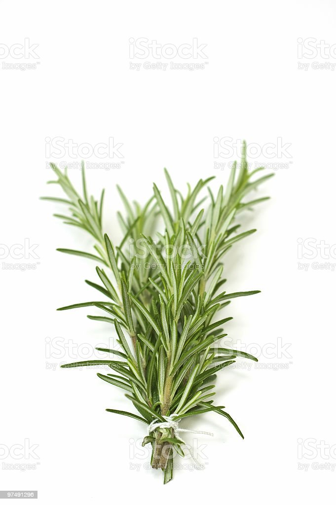 A sprig of fresh rosemary ready for your recipe  royalty-free stock photo