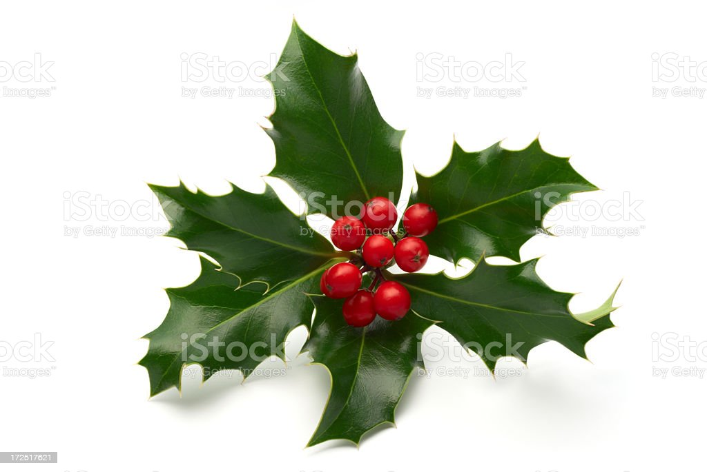 Sprig of holly leaves and berries isolated on white stock photo