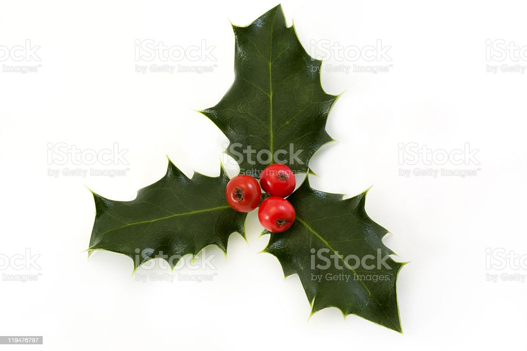 sprig of holly with berries over white royalty-free stock photo