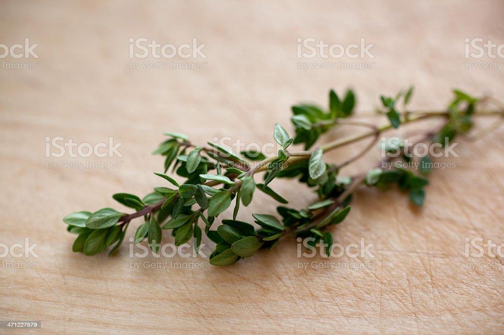 Sprig of Lemon Thyme stock photo
