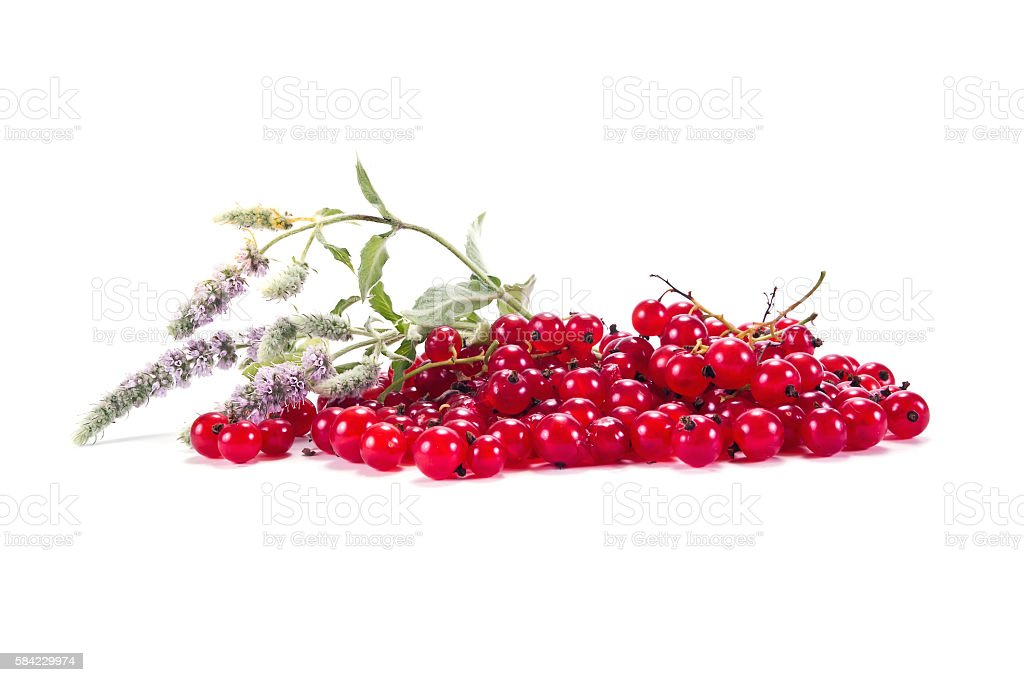 Sprig of red currant with leaves stock photo
