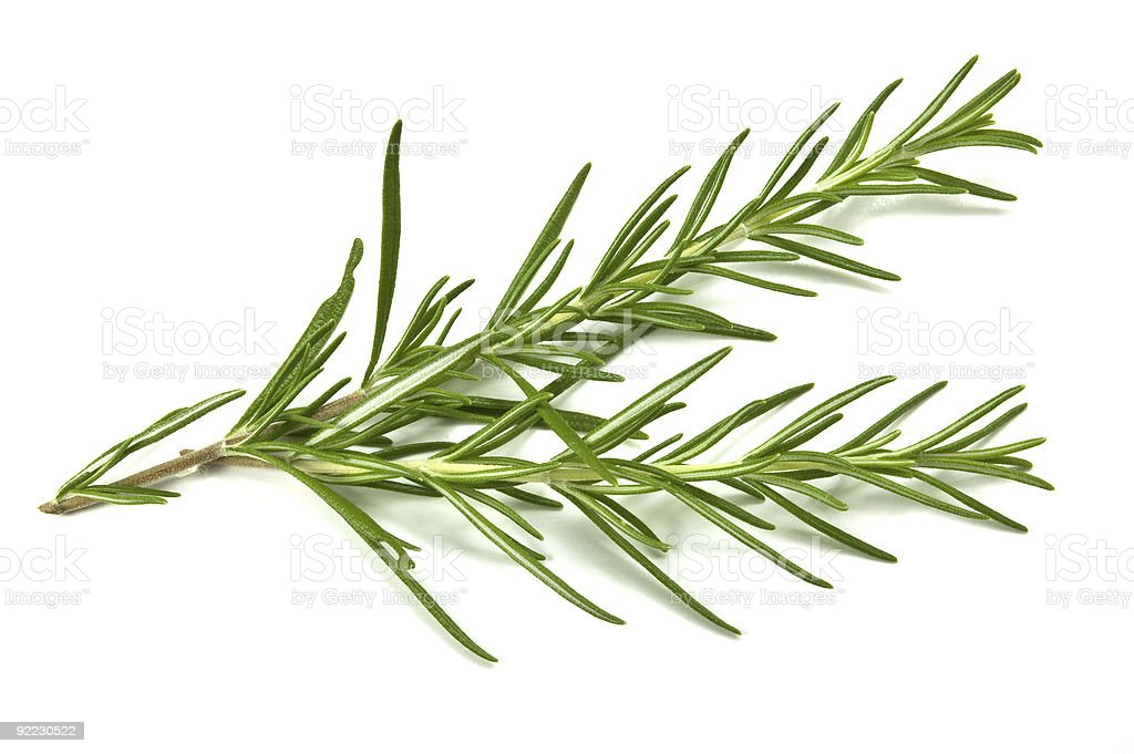 Sprig of rosemary against white background royalty-free stock photo