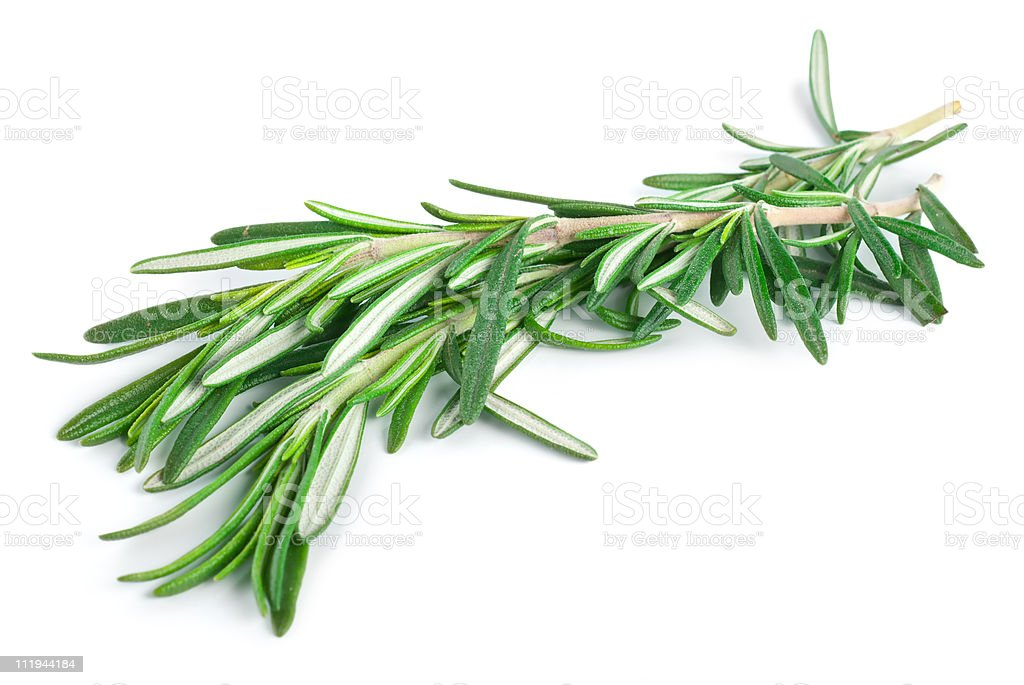 Sprig of rosemary on a blank background stock photo