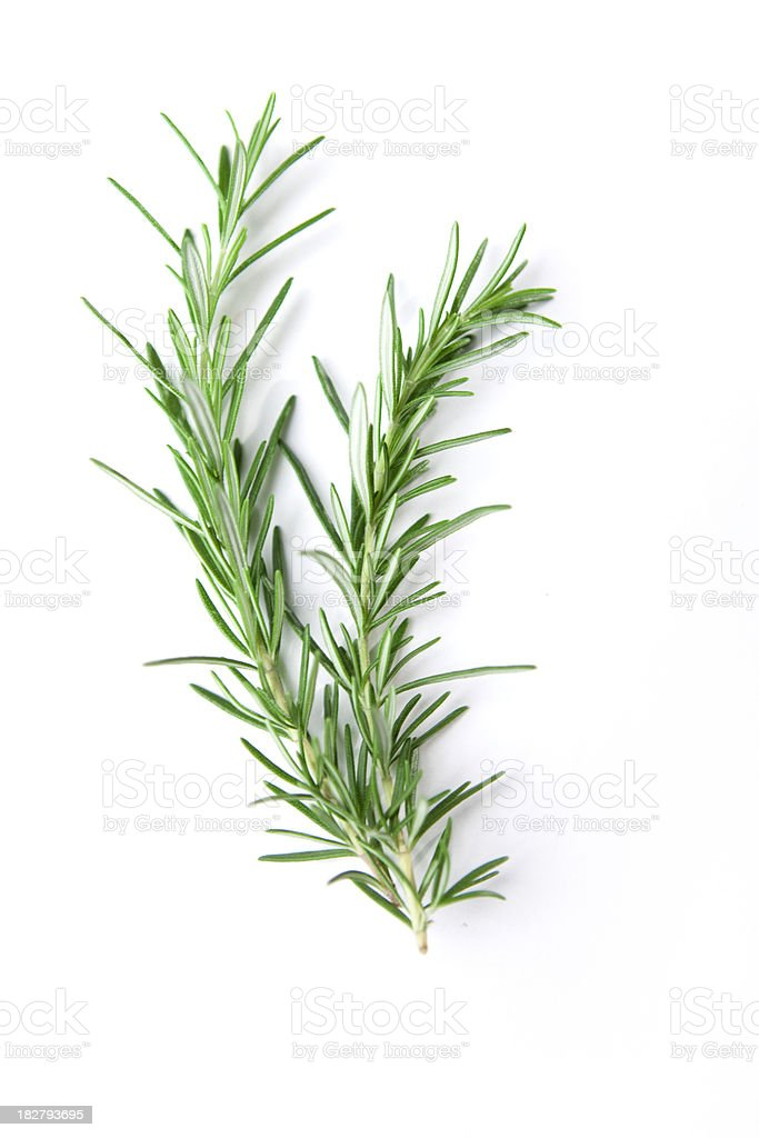 Sprig of Rosemary stock photo