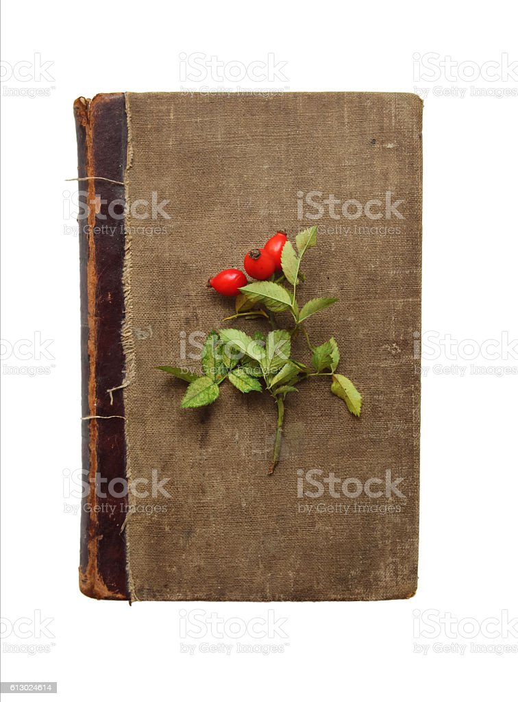 sprig of wild rose on old book, isolated on white stock photo