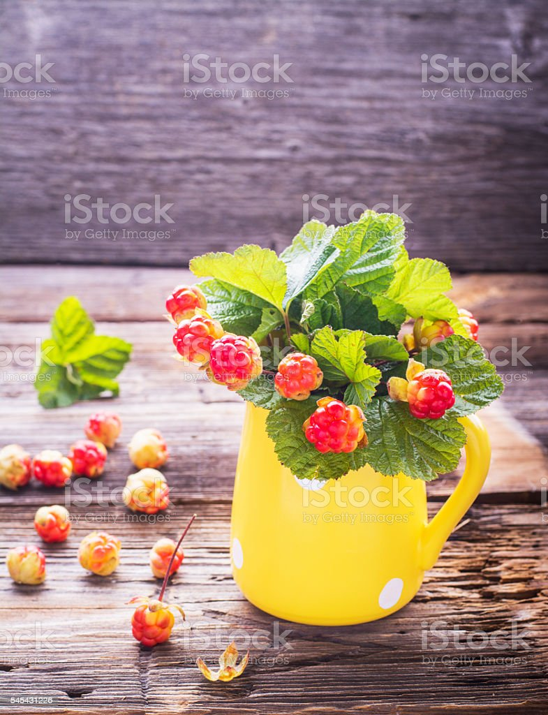 Sprigs northern cloudberry keep pace with red berries in a stock photo