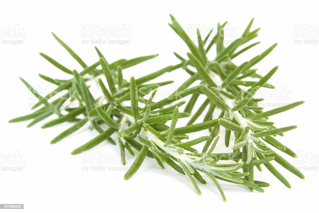Sprigs of fresh rosemary on white royalty-free stock photo