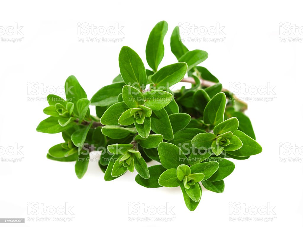 Sprigs of marjoram on a white background stock photo