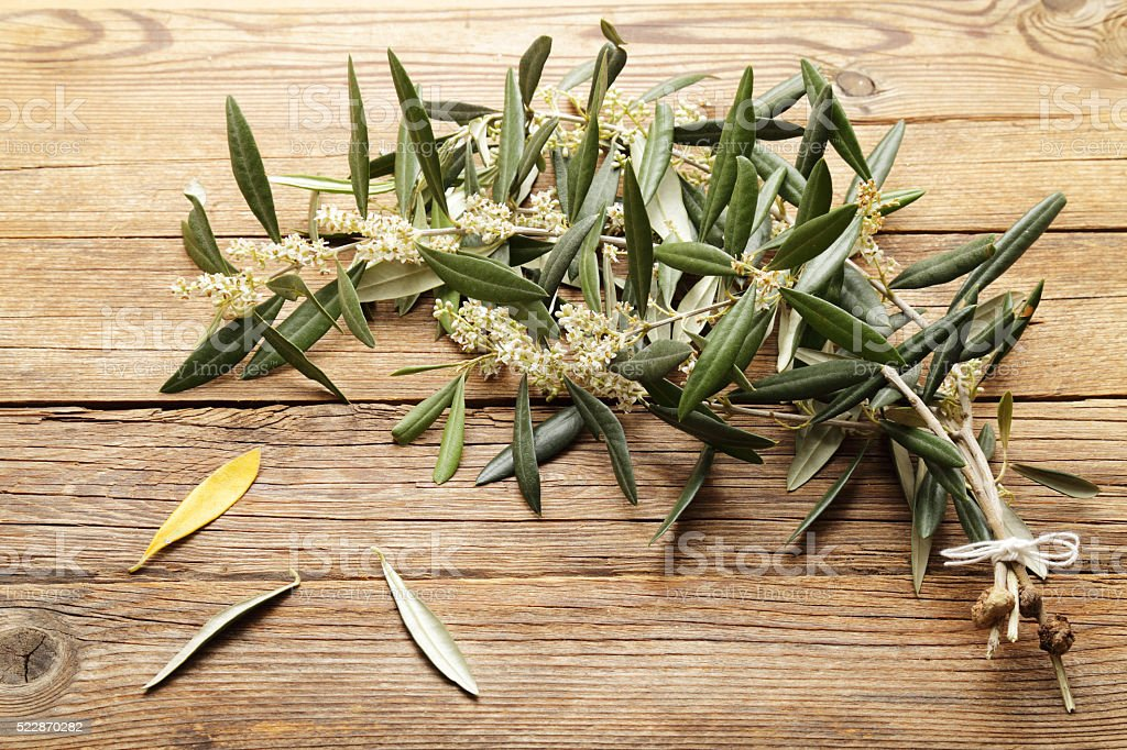 Sprigs of olive tree in bloom on wood background stock photo