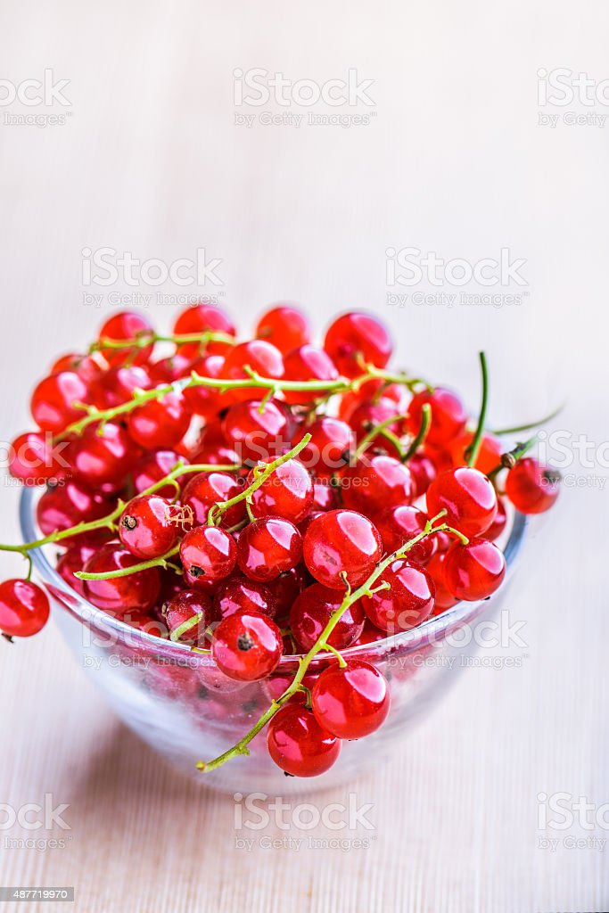 Sprigs of red currant stock photo