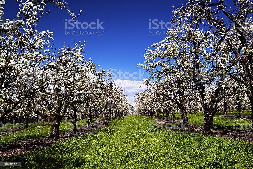 Primavera Vicolo di Nuova vita foto stock royalty-free