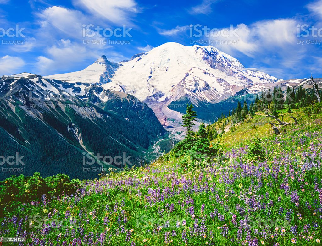 Spring alpine meadow in Mt Rainier National Park,WA stock photo
