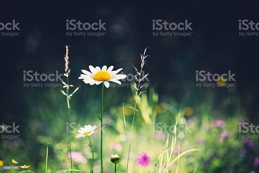 Spring Alpine Meadow stock photo