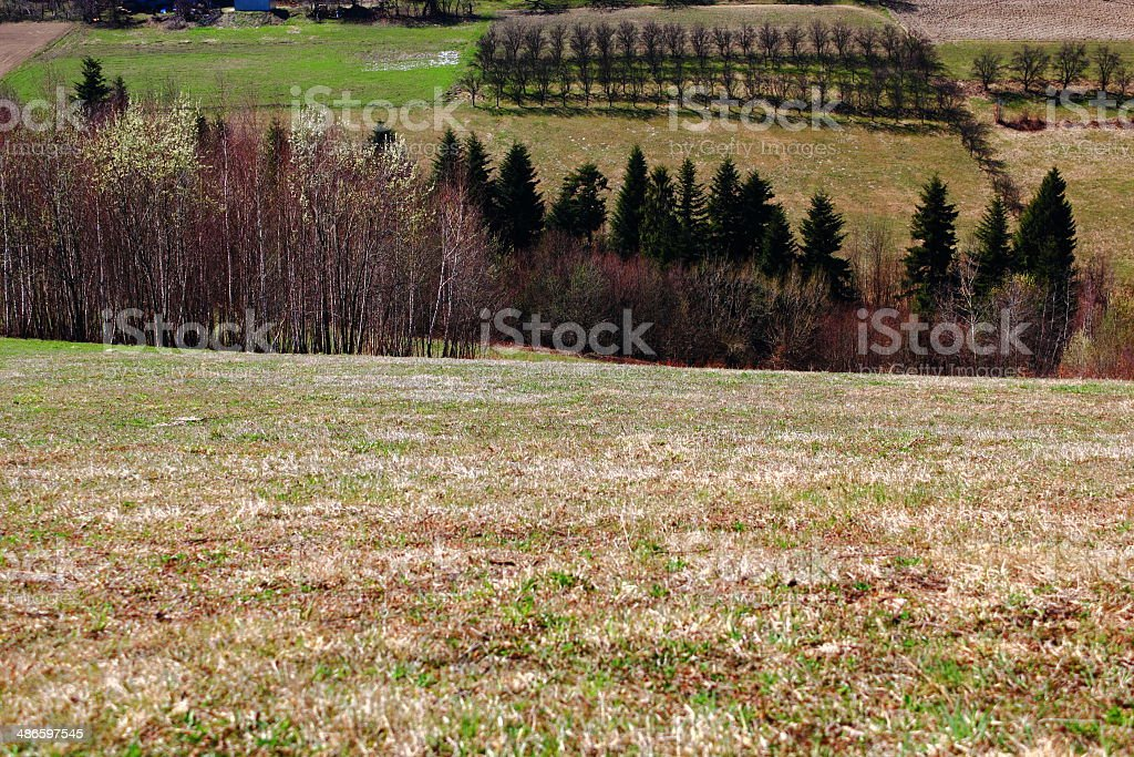Spring.  Apple orchard on Hills in Beskidy Mountains. Poland. stock photo