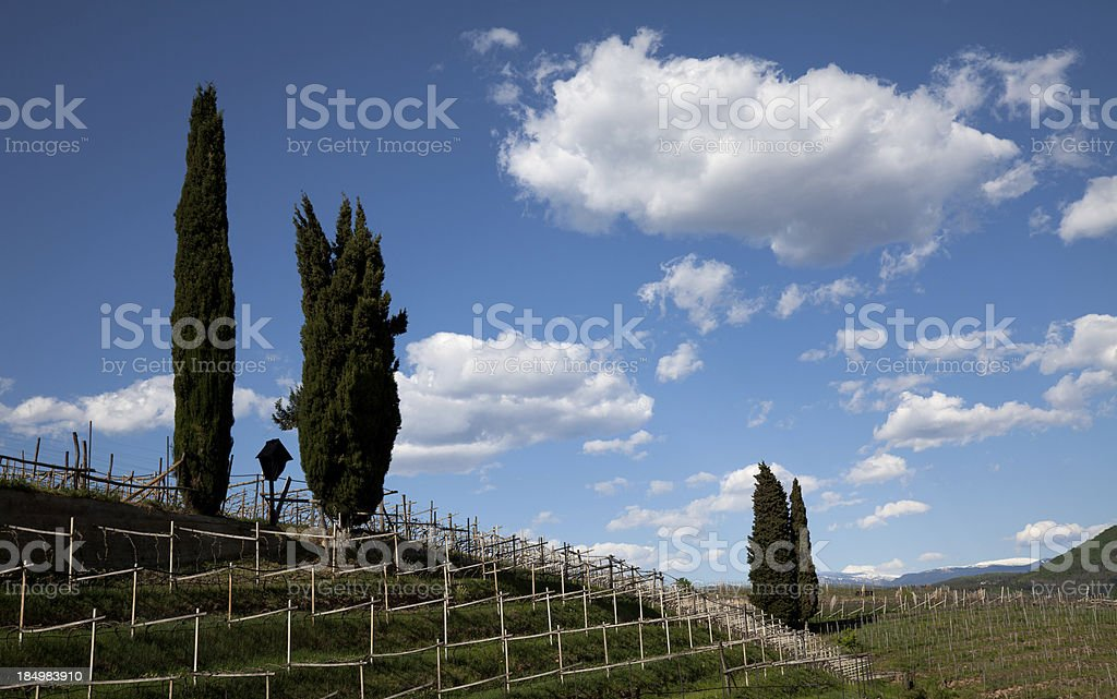 Spring approaching in wine-growing region royalty-free stock photo