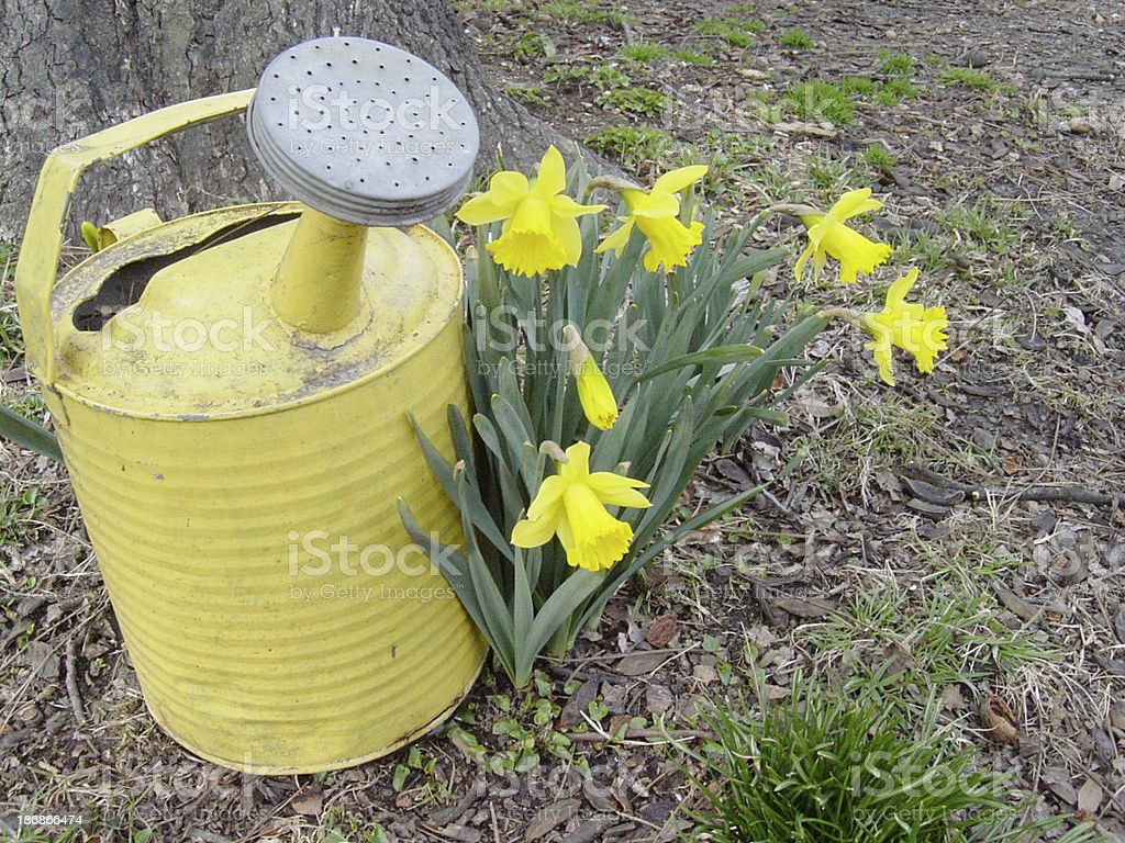 Spring Arrival stock photo
