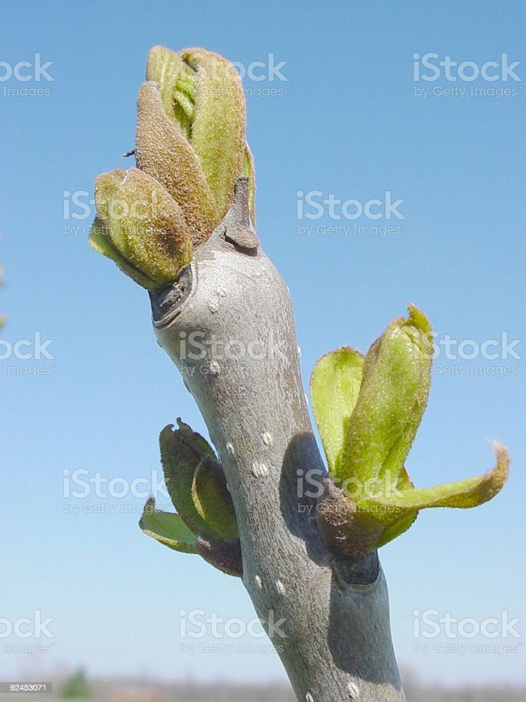 Spring Arrrives royalty-free stock photo