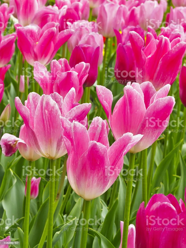 Spring at a glance in northern Illinois royalty-free stock photo