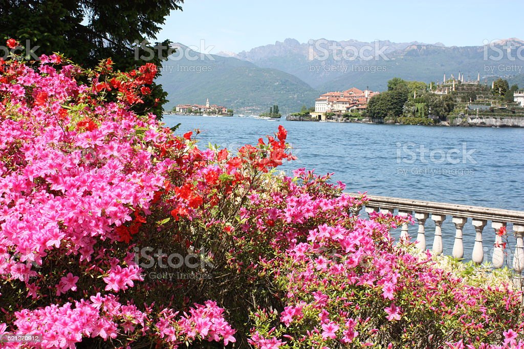 Spring at Lake Maggiore Japanese Azaleas blooming,  Italy stock photo