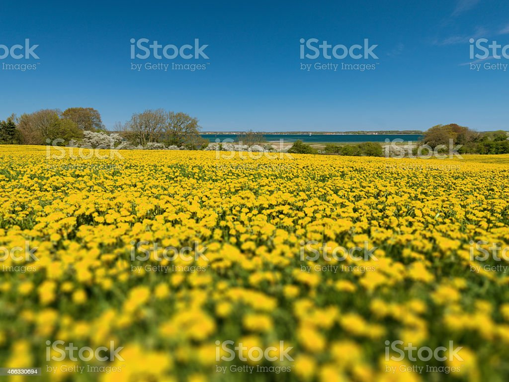 spring at the coast, schleswig holstein stock photo