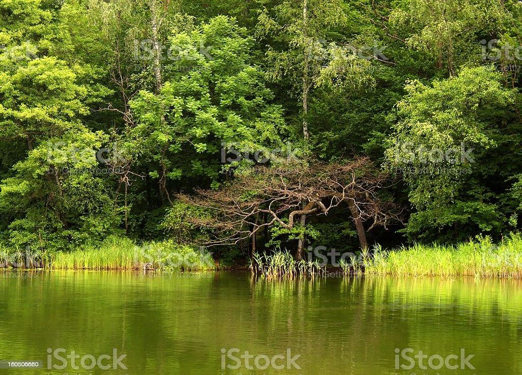 spring at the lake stock photo