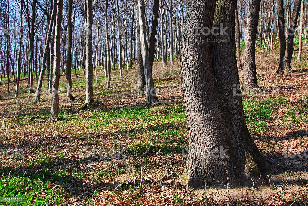 Spring awakening in the forest stock photo