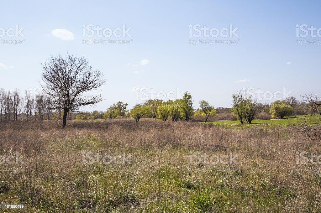 Spring. Awakening of nature. royalty-free stock photo