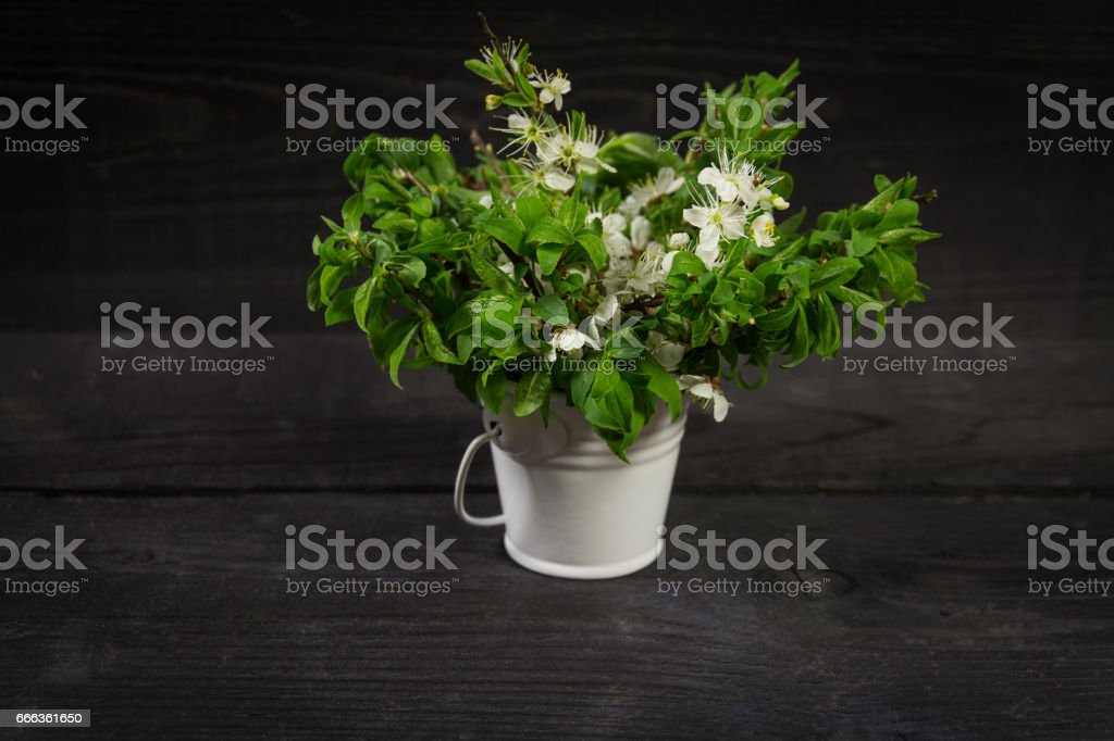 Spring background. Fruit flowers in a metal bucket on wooden table stock photo