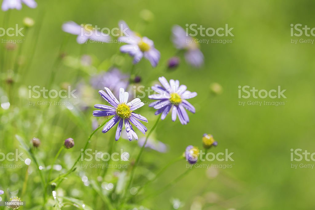 Spring background. royalty-free stock photo