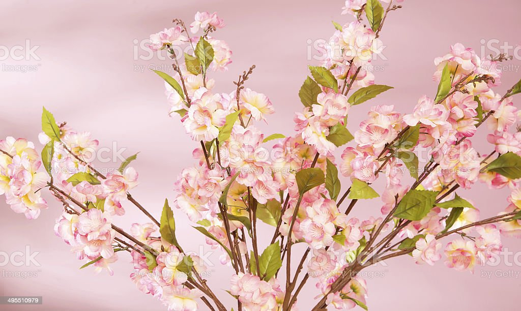 Spring background with pink flowers royalty-free stock photo