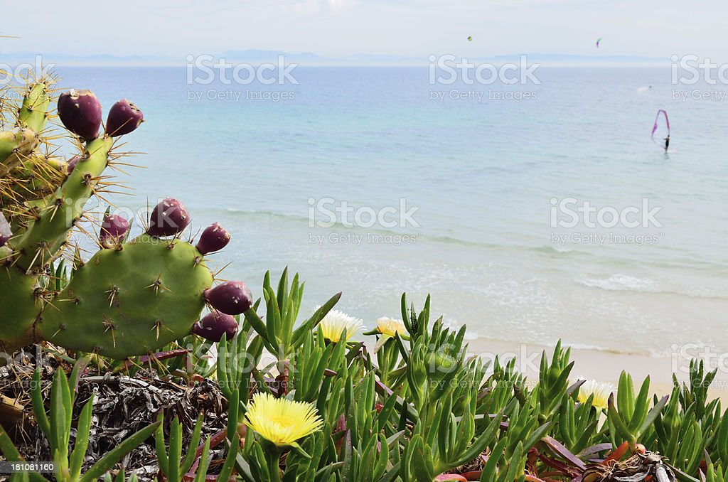 Spring beach Valdevaqueros royalty-free stock photo