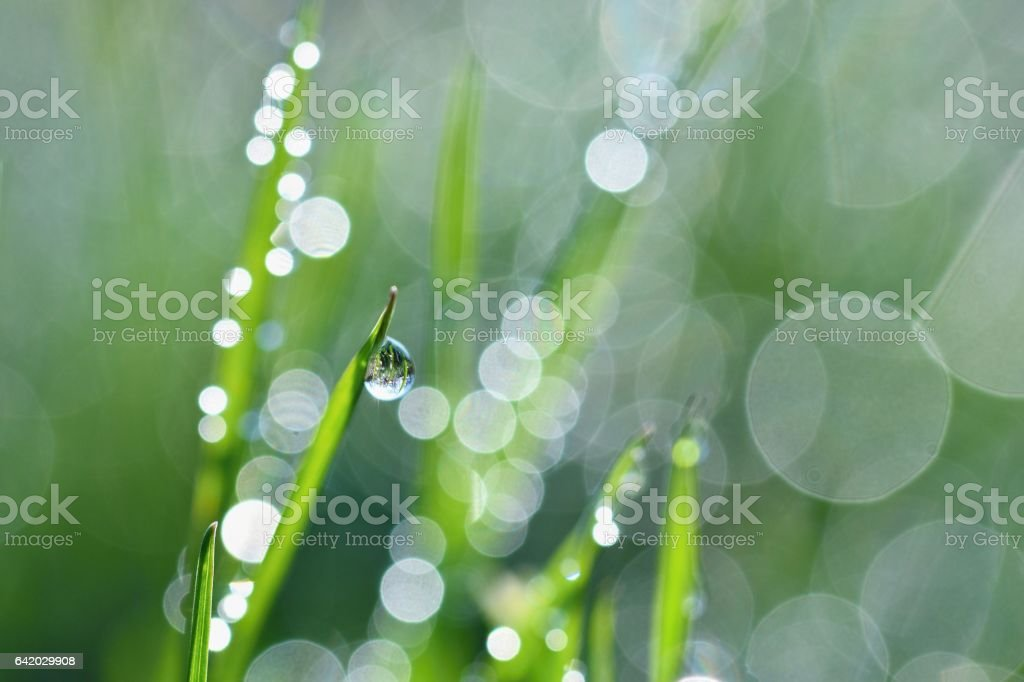 Spring. Beautiful natural background of green grass with dew. stock photo