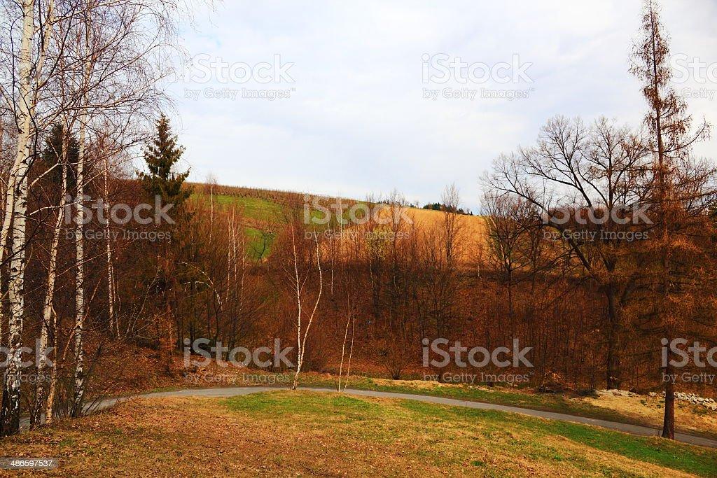 Spring. Birch in Beskidy Mountains. stock photo