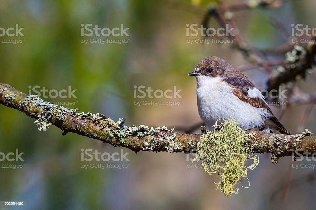 Spring bird stock photo