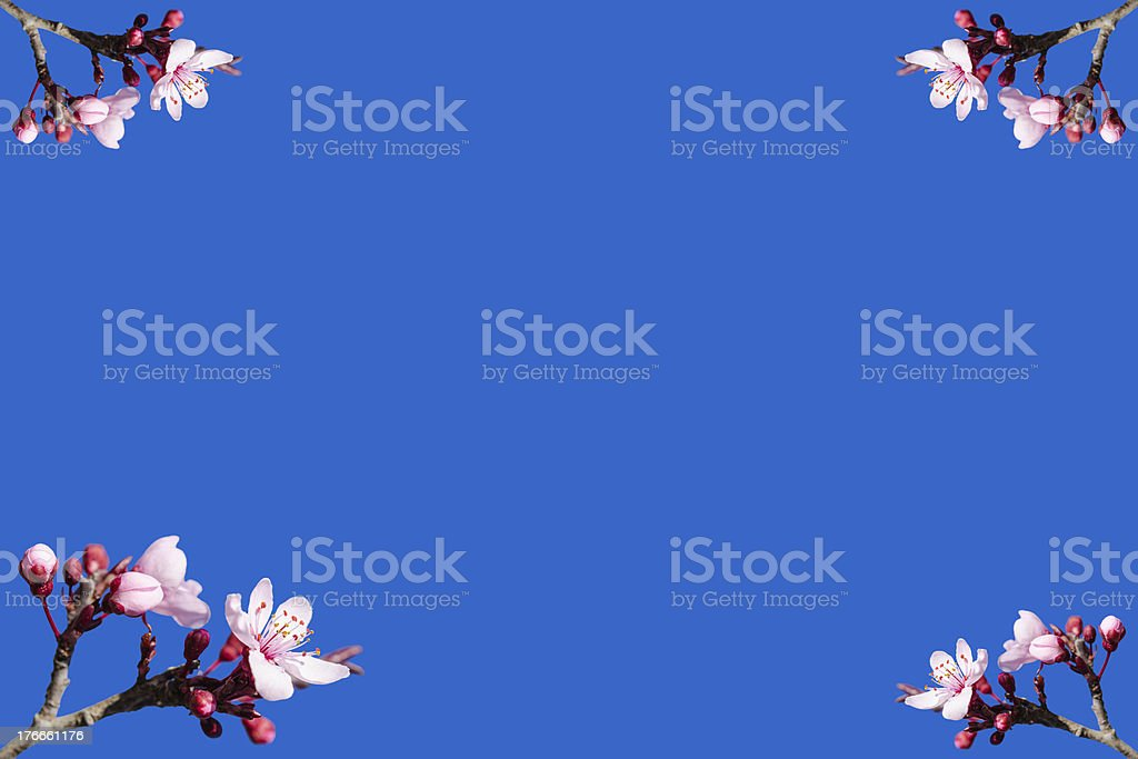 Spring blooming frame or postcard against blue sky royalty-free stock photo